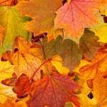 10 producten die perfect passen binnen het thema herfst