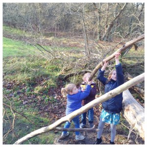 bos hut bouwen 2016