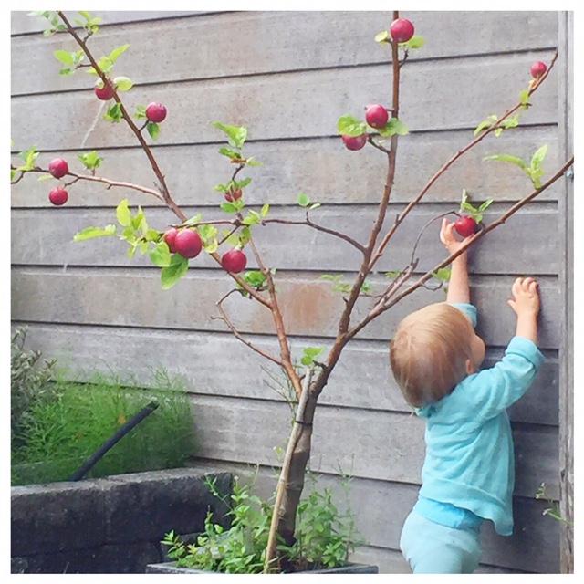 Stiekem appels plukken van de boom in de tuin