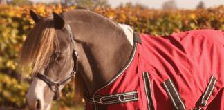 Ontspannen? Probeer paardrijden.