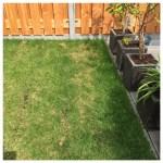 Kies je kunstgras of echt gras?