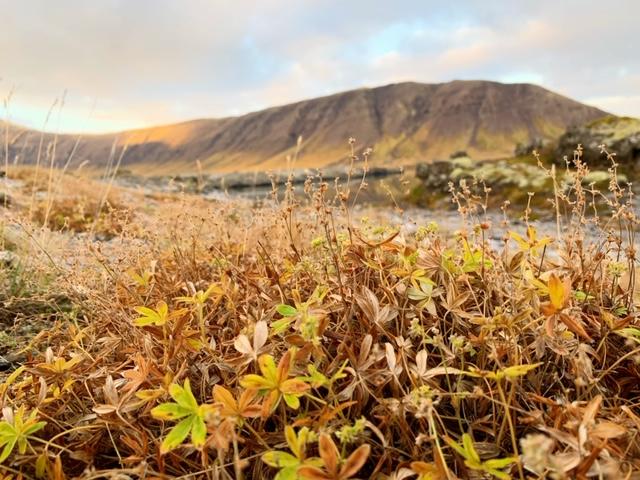 Snaefellsnes herfst
