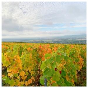 wijngaarden champagnestreek mutigny