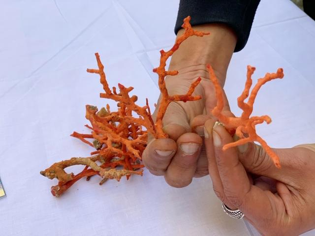 Tabarka koraal Noord-Tunesië