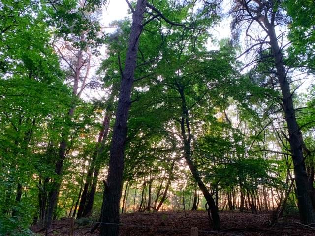 bos veluwse zoom