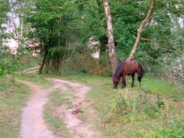 paard veluwse zoom