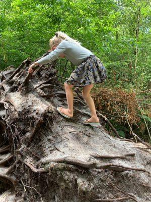 omgevallen boom klimmen sparjebird