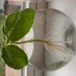 Plantjes stekken, alle informatie en tips verzameld