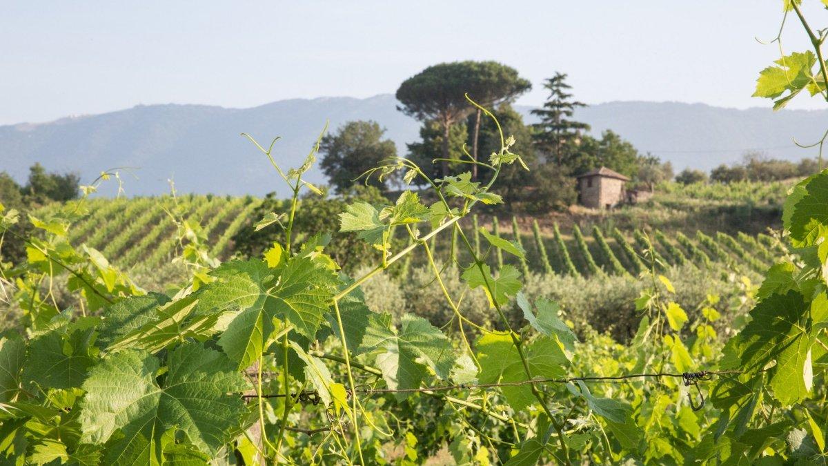 La Strada del Vino Cesanese: porte aperte il 9 e 10 giugno 2019