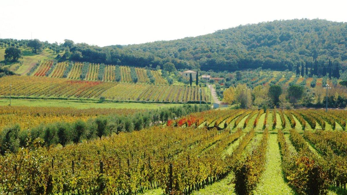 Vini Bulichella: Toscana e Giappone si incontrano