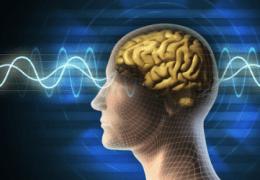 ¿Cómo se comporta un Cerebro Hipnotizado?