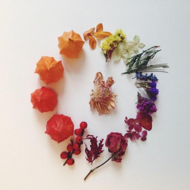botanical advent flower art rainbow