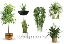 """Φυτά """"Βόμβες Οξυγόνου"""" που θα Πρέπει να έχετε στο Σπίτι σας!"""