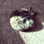 cat in square of sunshine