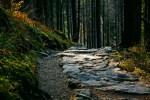 trail ahead, tall leafy trees, at dusk