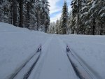 tips of cross country skis on trail with pine trees all around