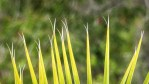 blades of grass with split ends