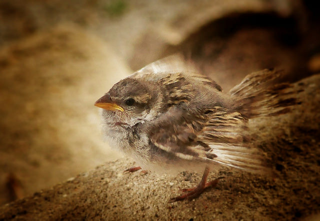 baby sparrow on branch