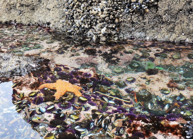 a tide pool -- rocky pools with water -- filled with starfish and other urchin-like creatures