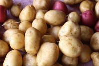 close-up shot of a pile of potatoes, mostly brown, a few purple