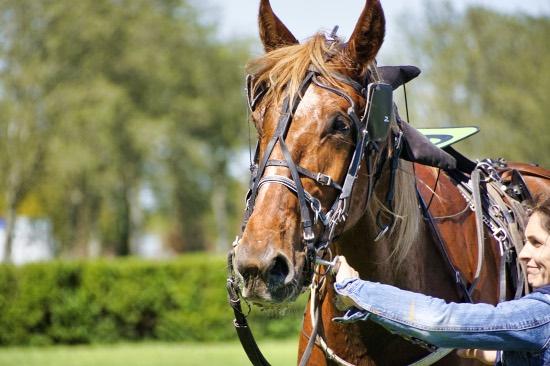 3eme course - Hippodrome Chatillon sur Chalaronne