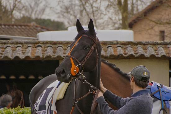 Hippodrome Chatillon sur Chalaronne - course 25/03/2019 - Photo 7