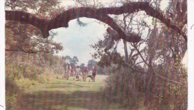 Golf Lake Venice Golf Club Venice Florida 1960   HipPostcard Golf Lake Venice Golf Club Venice Florida 1960