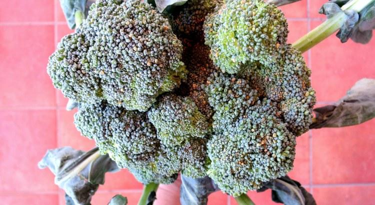 Broccoli Pressure Cooker /Instant Pot Nutriton