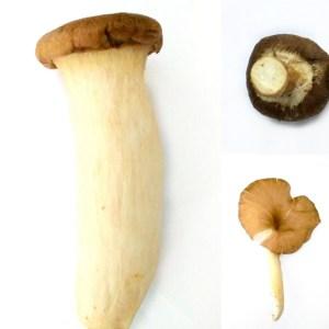 Spark Mushroom's Antioxidant SUPER-POWERS with Pressure!