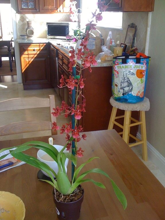 Feng Shui Kitchen Paint Colors Pictures Ideas From Hgtv: 5 Feng Shui Kitchen Tips To Improve Your Luck