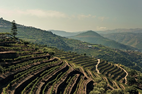 The stunning Douro Valley. These days, though, there's a whole lot more to Portugal than Port.