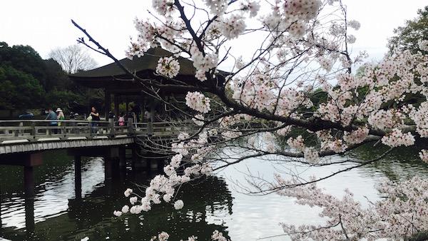 円通寺|京都 桜の時期に行く紅葉の庭は穴場です