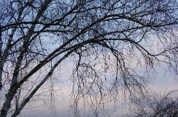 冬の庭(ウインター・ガーデン)の魅力