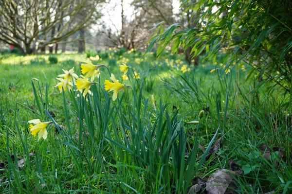 2月のケンブリッジ植物園、イギリスの庭