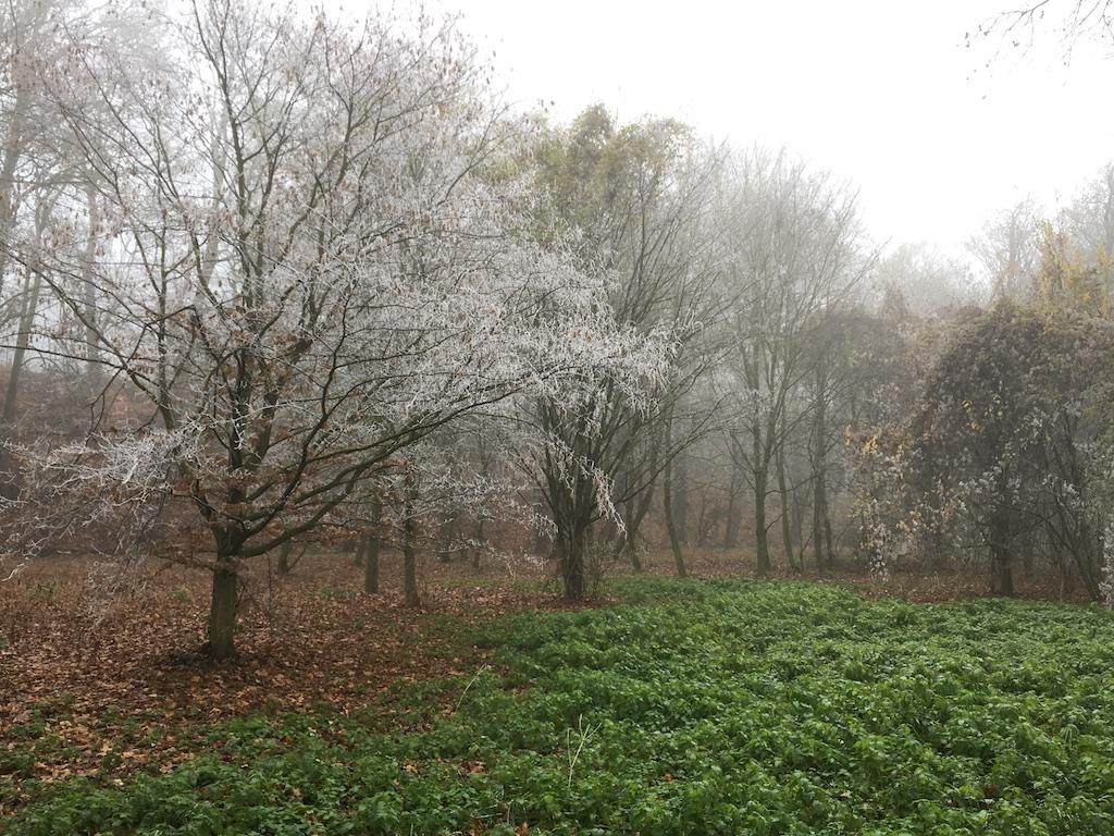 冬の庭の魅力、ヴェルサイユの公園散歩