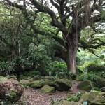 マルティニーク島のレインフォレスト・ガーデン