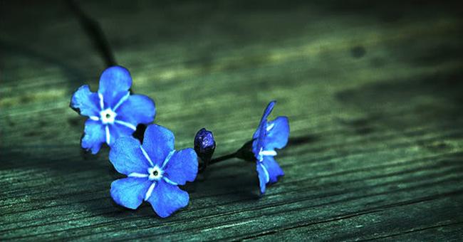 bunga-biru.jpg