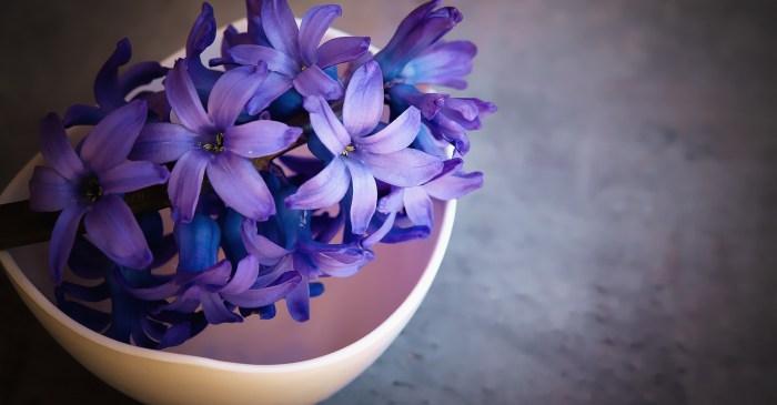 hyacinth-1403653_1920.jpg