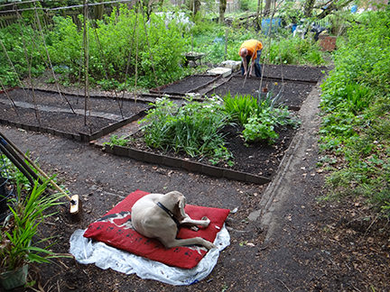 Justin putting tiles around an allotment bed