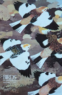 illustration of snow buntings from a vintage 1970s RSPB magazine
