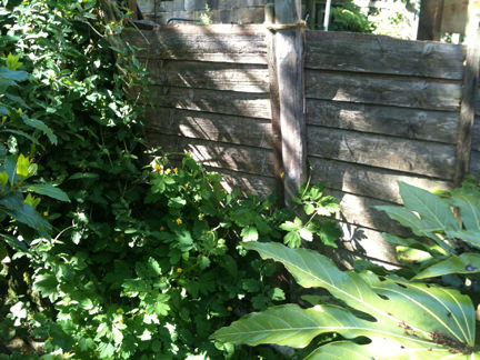 Our old rotting, tumble down garden fence