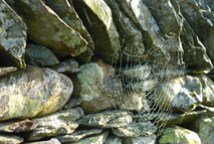 close up view of a spider's web on a stone wall, Little Langdale, Lake District, Cumbria