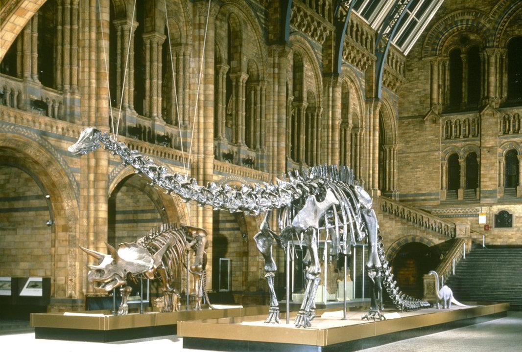 متحف التاريخ الطبيعي من افضل الأماكن السياحية في جنيف