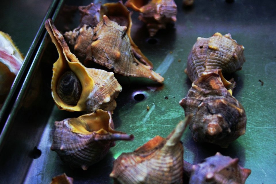 фиолетовый цвет получают из моллюсков