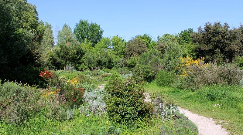 jardins du parc de l'île Saint Germain