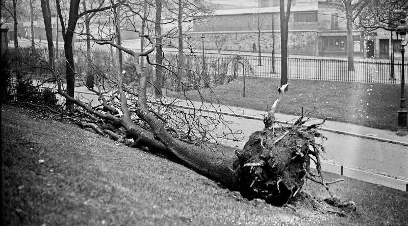 des arbres déracinés aux Buttes Chaumont le 23 décembre 1925 par l'Agence Rol