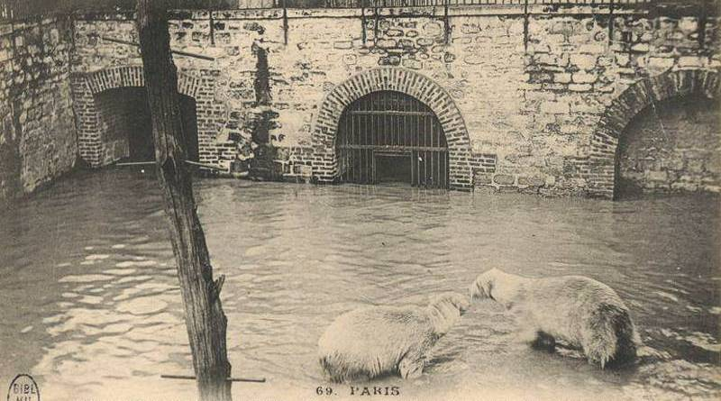 ours du jardin des plantes en 1910