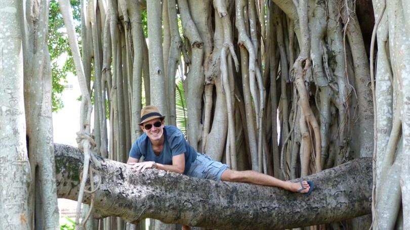 Australie fig tree victoria
