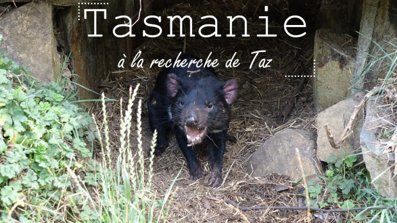 Tasmanie diable taz road-trip australie