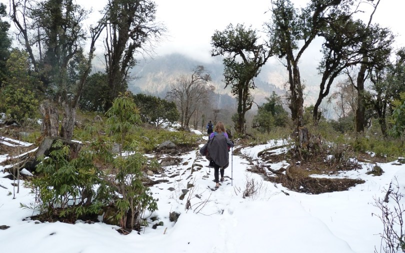 Annapurna foret neige